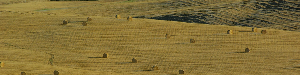 Round bales of straw in the fields after harvest