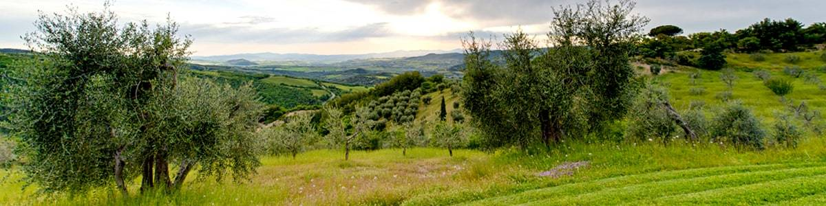 Wide view over the lower Orcia Valley